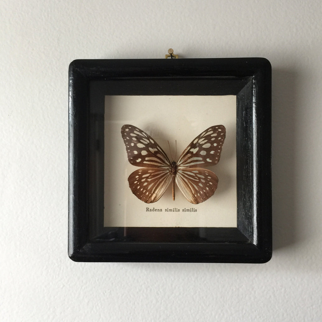 Petite Vintage Butterfly Taxidermy #1
