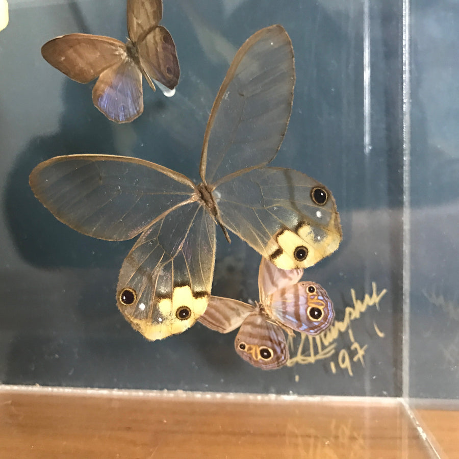 LARGE Vintage Butterfly Taxidermy / Art Work