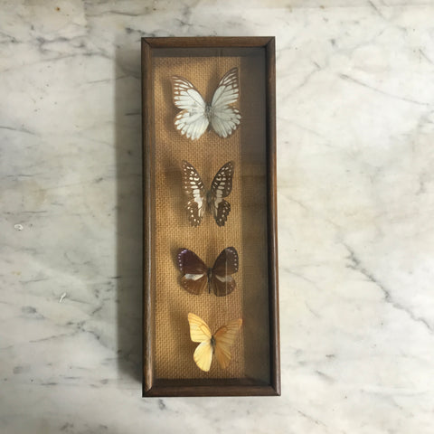 Vintage Butterfly Taxidermy Collection #7
