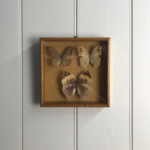 Trio Vintage Butterfly Taxidermy Collection #8