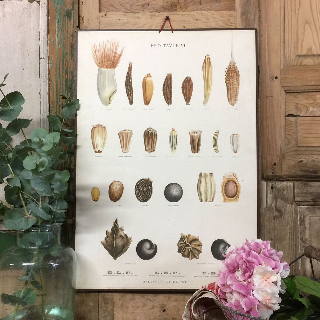 Vintage Ellen Backe Botanical Wall Chart #1