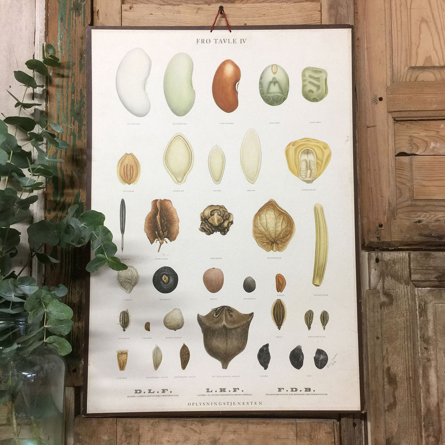 Vintage Ellen Backe Botanical Wall Chart #2