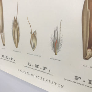 Danish Vintage Botanical Wall Chart #2 (+ optional magnetic frame)