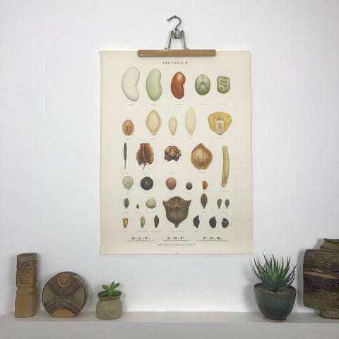 Vintage Danish Botanical Wall Chart #4