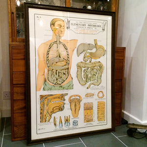 Vintage Framed Elementary Physiology Anatomical Chart 'No.5 Organs'