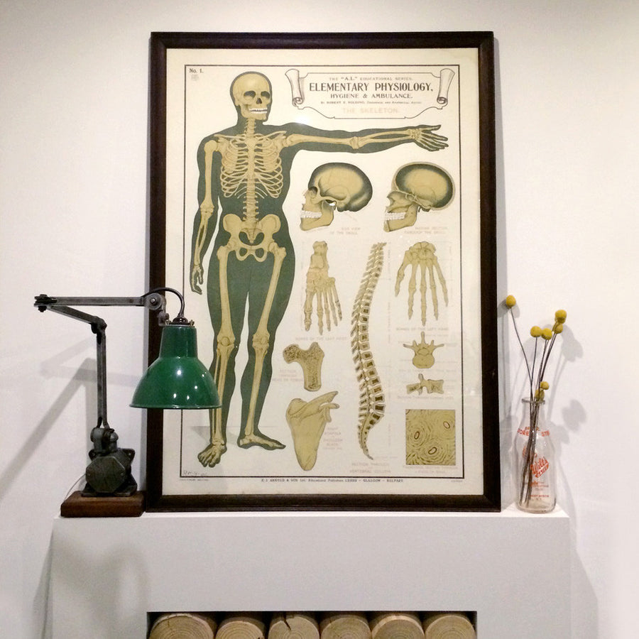 Vintage Framed Elementary Physiology Anatomical Chart 'No.1 Skeleton'