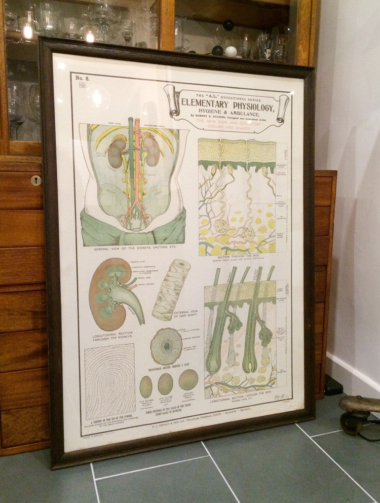 Vintage Framed Elementary Physiology Anatomical Chart 'No.8 Skin'