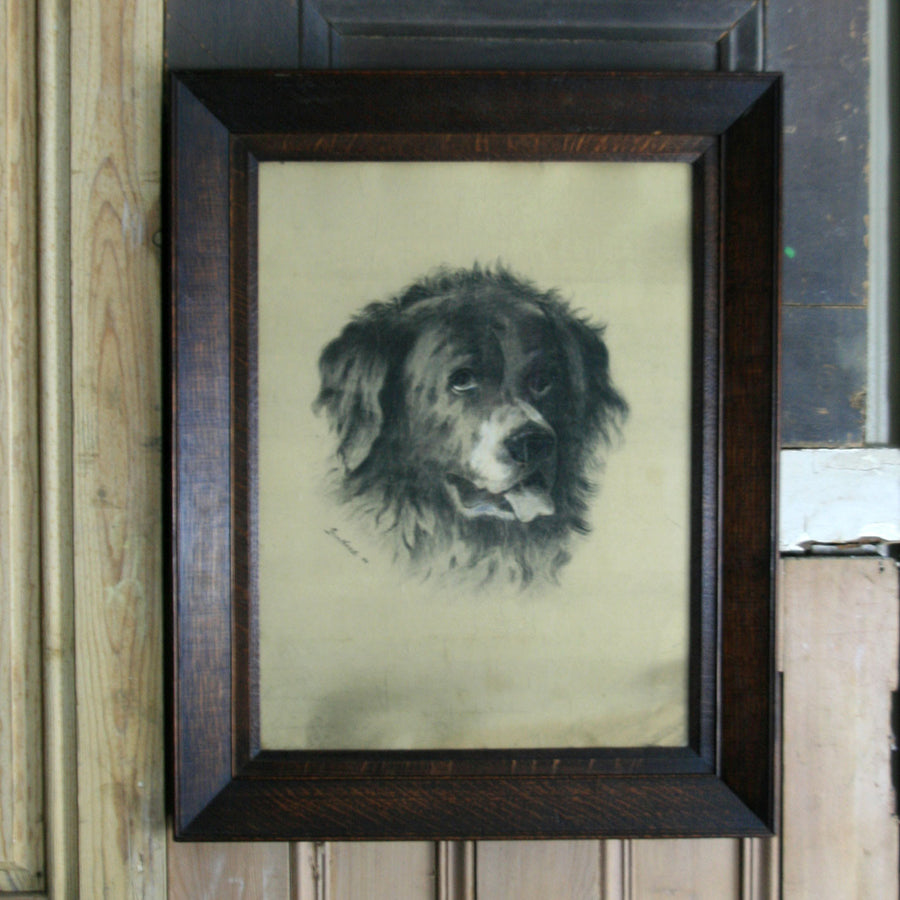 Original Vintage Framed & Signed St Bernard Illustration