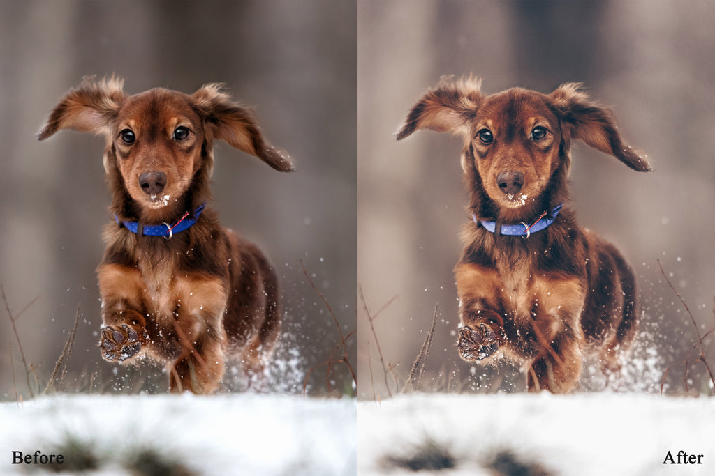 Matte lightroom presets dog