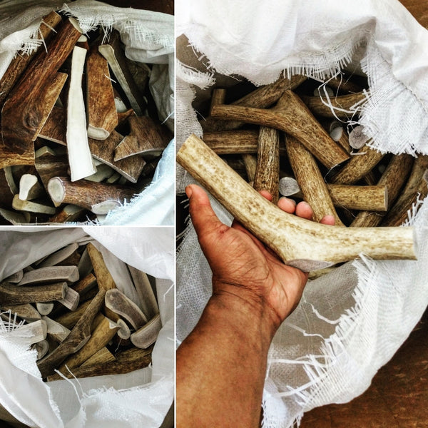 Premium naturally shed moose and elk antlers. - Montana Select Premium Pet Products.