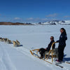 Huskies pulling girls snow iceland dogsled snowdogs
