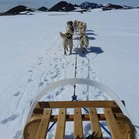 Huskies pulling snow dogsled snowdogs