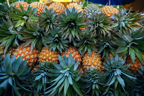 fresh load of pineapple in Hawaii