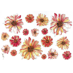 Watercolor pictures of flower heads. The flowers are Gerbera daisies and daisies.