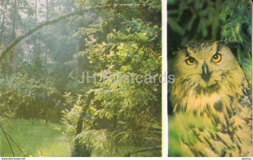 Belovezhskaya Pushcha National Park - In the Puscha thickets  - Eurasian eagle-owl - 1981 - Berarus USSR - unused - JH Postcards