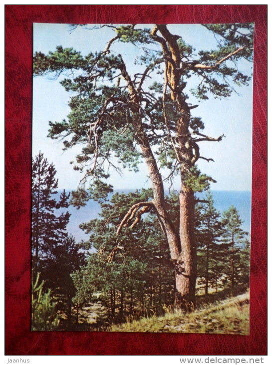 Lake Peipsi - Estonian lakes - pine tree - 1979 - Estonia - USSR - unused - JH Postcards