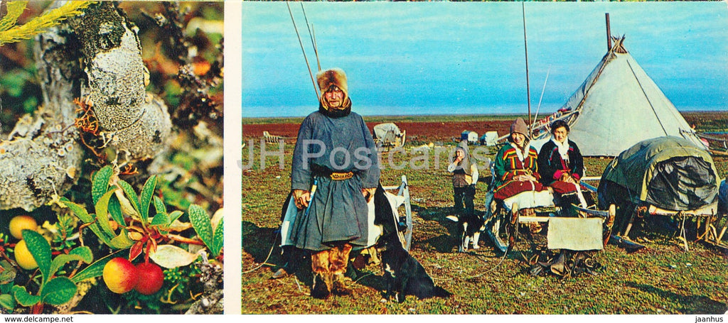 Alpine bearberry - Arctous alpina - native people - plants -  Tundra in bloom - 1973 - Russia USSR - unused - JH Postcards