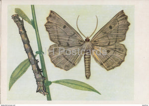 Ciosnik dwuzebek - Gonodontis bidentata - moth - insects - illustration - Poland - unused - JH Postcards