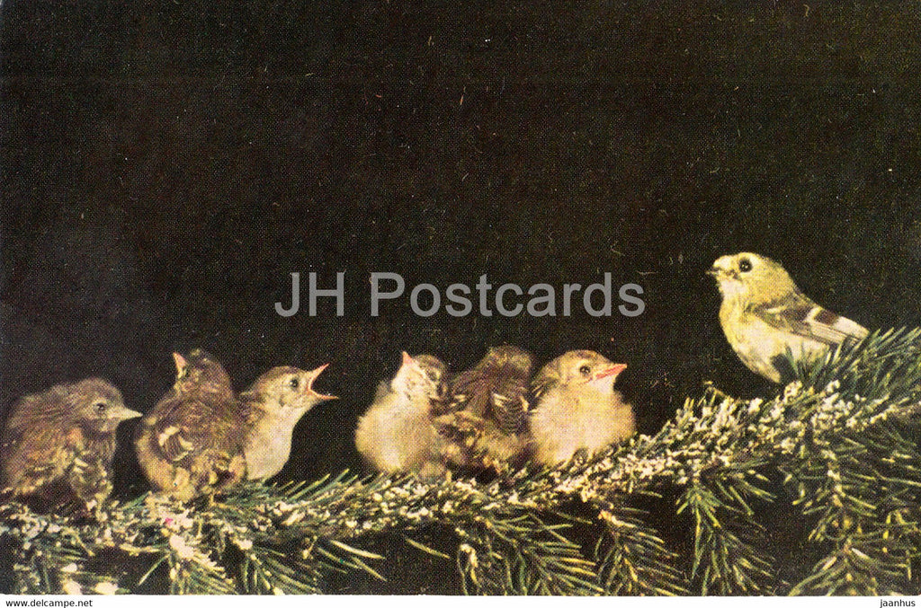 Goldcrest - Regulus regulus - birds - 1968 - Russia USSR - unused - JH Postcards