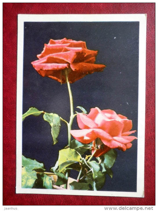 Greeting Card - red roses - flowers - 1969 - Belarus USSR - unused - JH Postcards