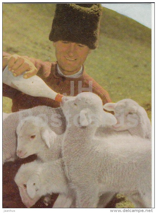 caring shepherd - lamb - 1966 - Moldova USSR - unused - JH Postcards