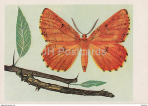 Szyplec leszczyniak - Angerona prunaria - moth - insects - illustration - Poland - unused - JH Postcards