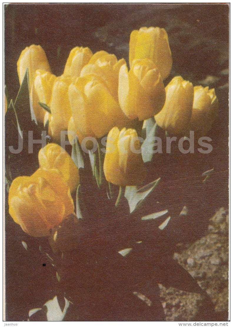 greeting card - yellow tulips - telegram - 1975 - Estonia USSR - used - JH Postcards