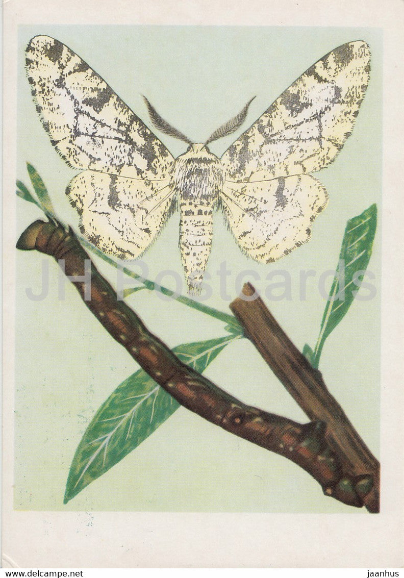 Wlochacz brzoziak - Peppered moth - Biston betularia - moth - insects - illustration - Poland - unused - JH Postcards