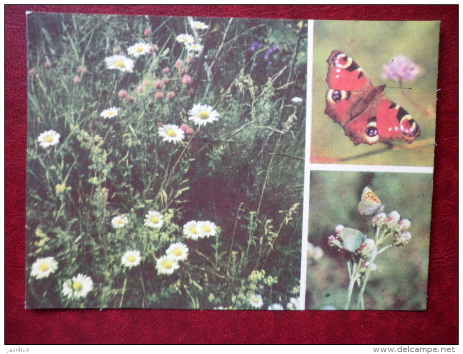 Lycaenidae - Inachis io -  European Peacock - butterflies - 1977 - Estonia USSR - unused - JH Postcards
