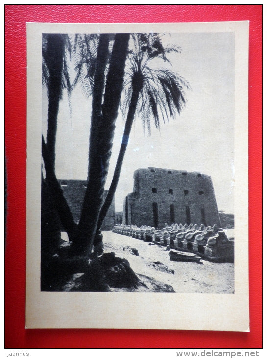 The Avenue of Sphinxes in Karnak , II Millennium BC - Egypt - Architecture of Ancient East - 1964 - Russia USSR - unused - JH Postcards