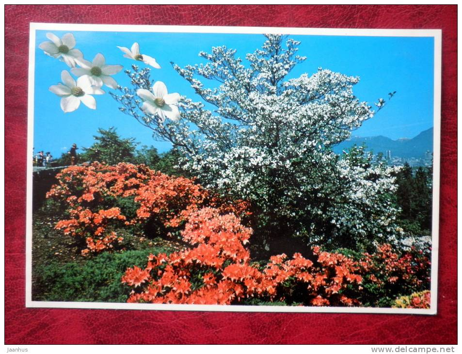 British Columbia`s Dogwood - Canada - unused - JH Postcards
