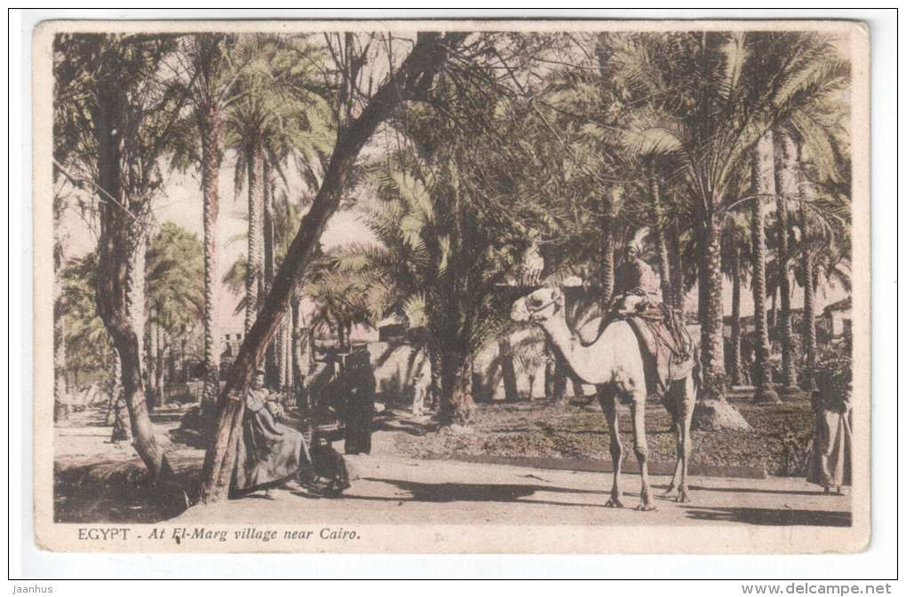At El-Marg Village near Cairo - camel - 51 - Egypt - old postcard - unused - JH Postcards