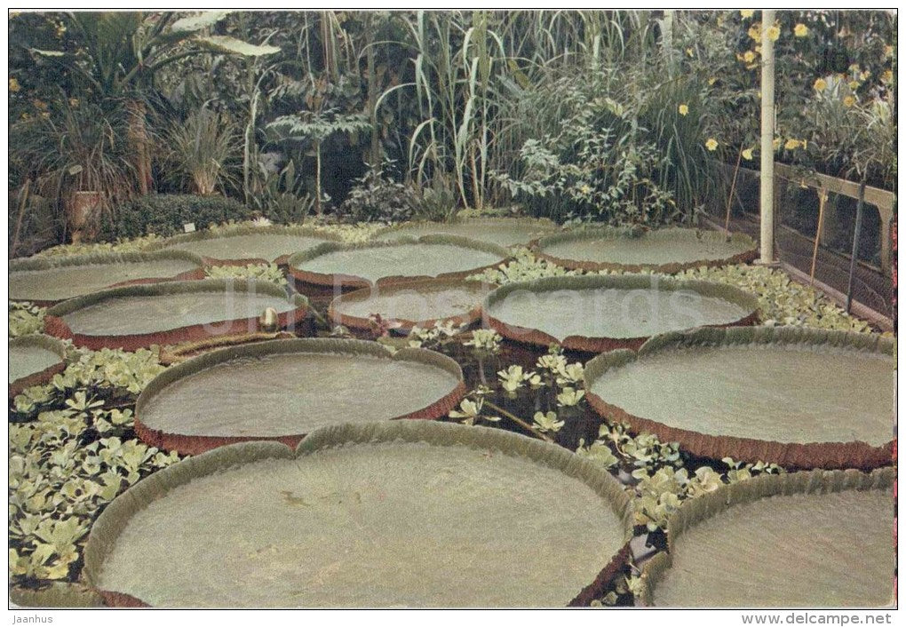 The Great Amazon Water Lily - Royal Botanic Gardens - Kew - England - United Kingdom - unused - JH Postcards