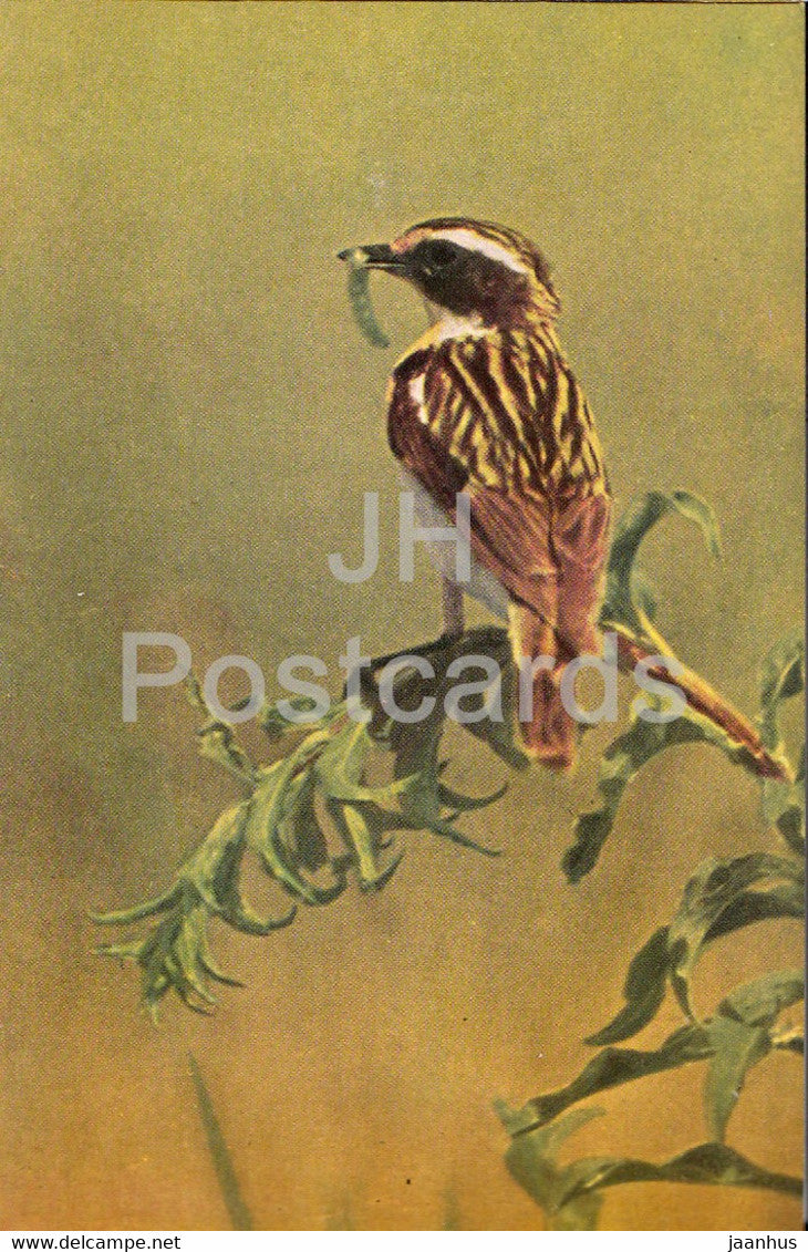 Whinchat - Male bird - Saxicola rubetra - birds - 1968 - Russia USSR - unused - JH Postcards