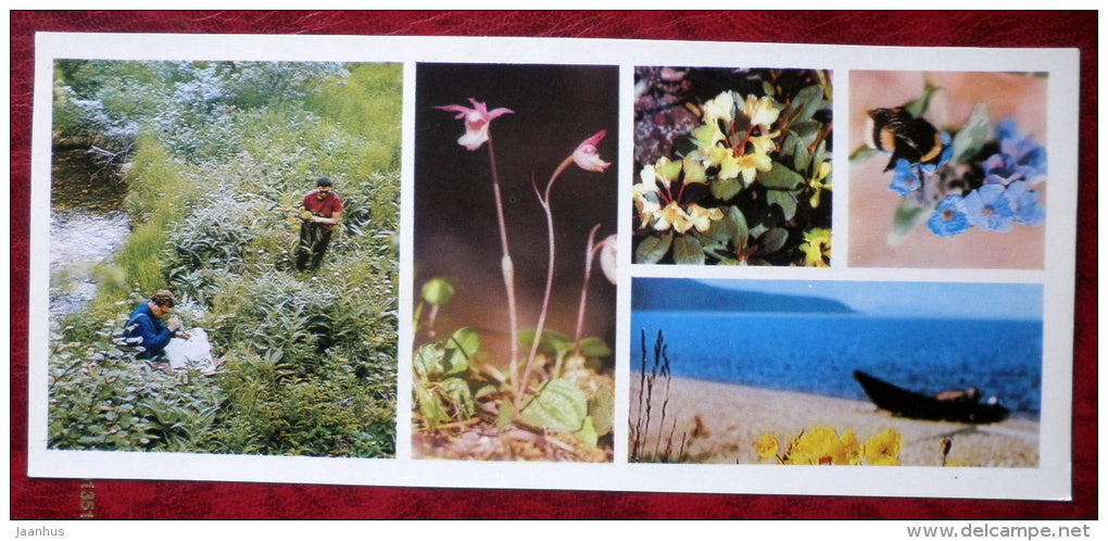 Plants - bee - Barguzinsky Nature Reserve - near lake Baikal - 1975 - Russia USSR - unused - JH Postcards