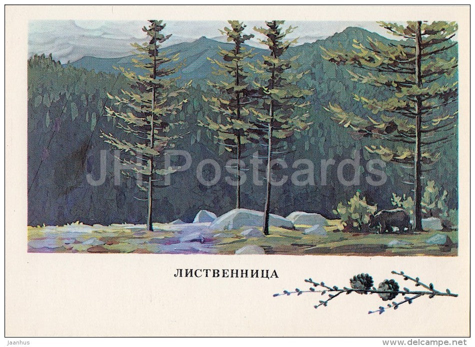 Larch - Larix - Russian Forest - trees - illustration by G. Bogachev - 1979 - Russia USSR - unused - JH Postcards