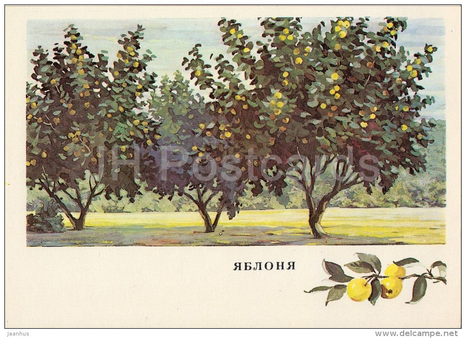 Apple trees - Russian Forest - trees - illustration by G. Bogachev - 1979 - Russia USSR - unused - JH Postcards
