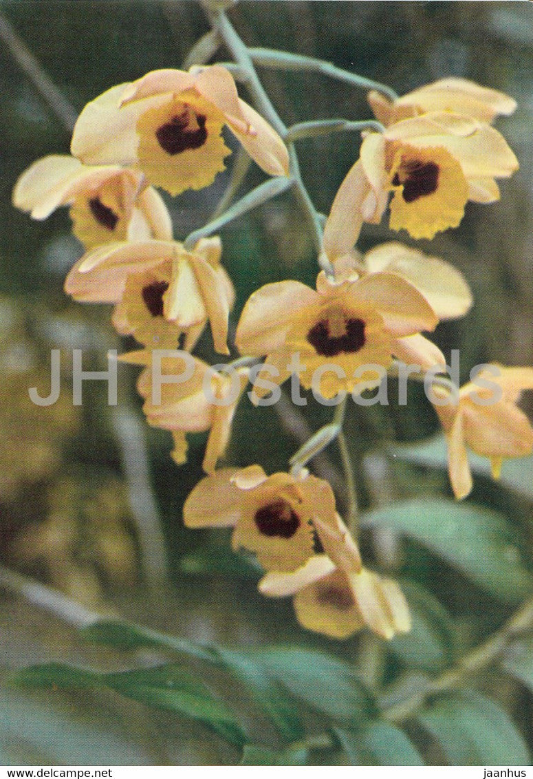 Orchid - Phong Lan - yellow - flowers - Vietnam - unused - JH Postcards