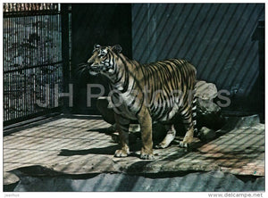 Tiger - Panthera Tigris - National Zoo - Cuba - unused - JH Postcards