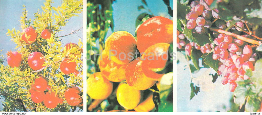 Bounties of Crimean Nature - apple - grape - pomegranate - Crimea - 1979 - Ukraine USSR - unused - JH Postcards