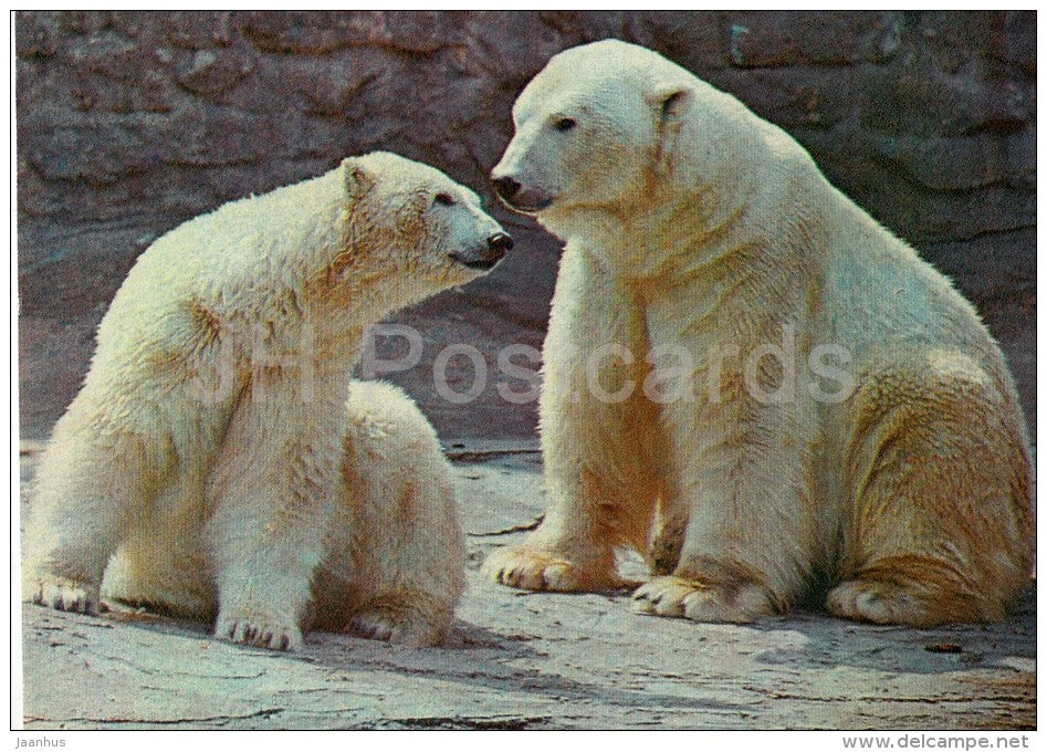 Polar bear - Thalarctos maritimus - Moscow Zoo - 1982 - Russia USSR - unused - JH Postcards