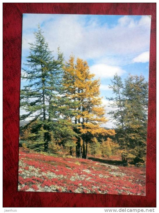 Fall in Chukotka - forest - trees - 1985 - Russia - USSR - used - JH Postcards