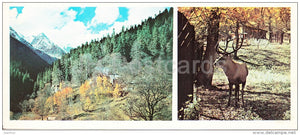 The gorge of Alibek - Caucasian Royal Deer - Dombay - Karachay-Cherkessia - Caucasus - Russia USSR - 1983 - unused - JH Postcards