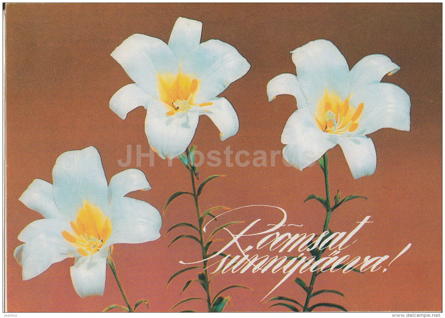 white lily - flowers - 1992 - Estonia - used - JH Postcards