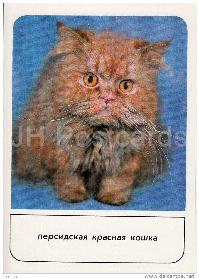 Persian Red Cat - cats - Russia USSR - 1989 - unused - JH Postcards