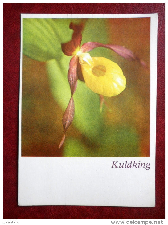 Greeting card - Lady's slipper - orchid - flowers - 1981 - Estonia USSR - unused - JH Postcards
