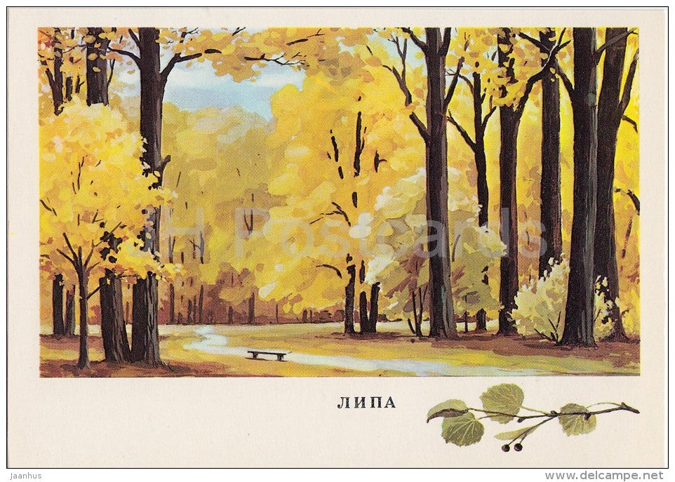 Linden - Tilia - Russian Forest - trees - illustration by G. Bogachev - 1979 - Russia USSR - unused - JH Postcards