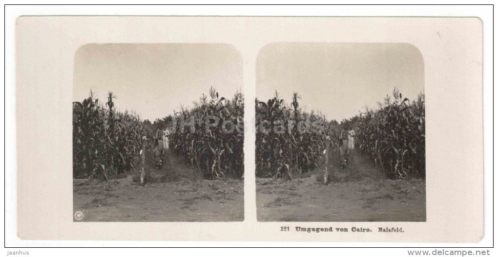 Cairo - corn field - Egypt - stereo photo - stereoscopique - old photo - JH Postcards