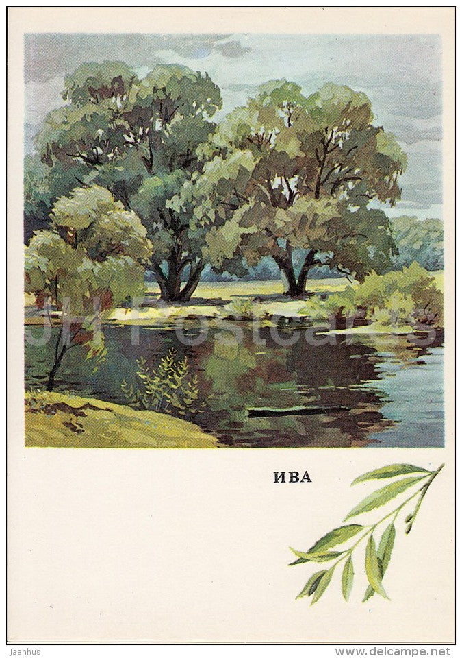 Willow - Salix - Russian Forest - trees - illustration by G. Bogachev - 1979 - Russia USSR - unused - JH Postcards