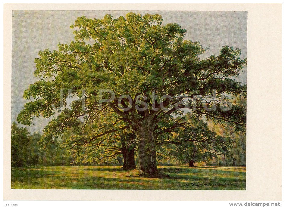 painting by I. Shishkin - Oak trees in Old Peterhof , 1891 - Russian art - Russia USSR - 1983 - unused - JH Postcards